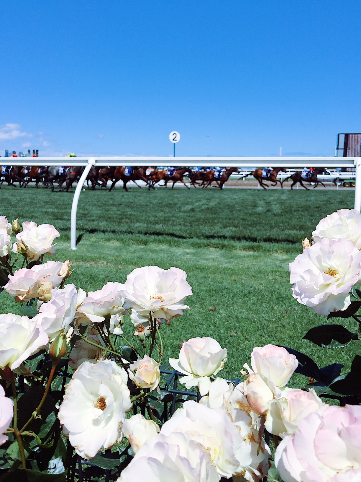 Melbourne-Cup-Race-Day-Outfit-Ideas-roses-at-flemington-racing-club-derby-day-horse-race